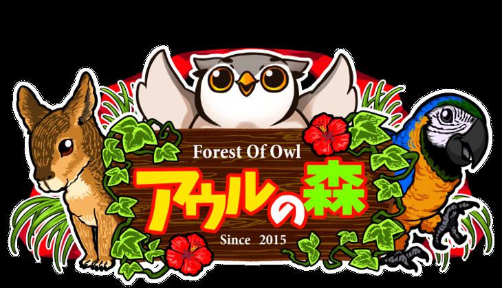 アウルの森 どうぶつカフェ フクロウカフェ owlcafe in tokyo